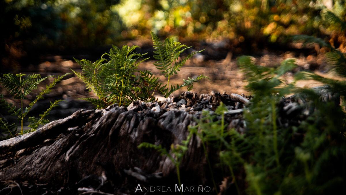 Andrea Mariño. Baiona Arde. 15/10/17